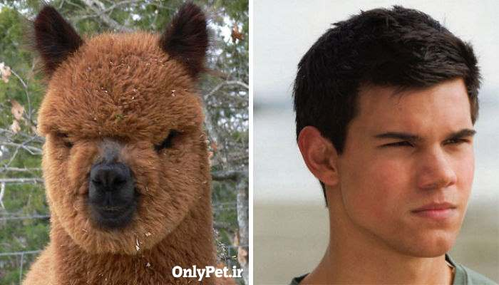 celebrity-look-alikes-animals-5_onlypet-ir