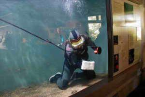 ماهیان آکواریومی