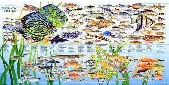 لیست ماهیان اب شیرین