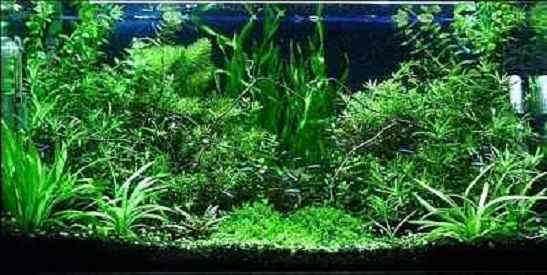 گیاهان رایج آکواریومی