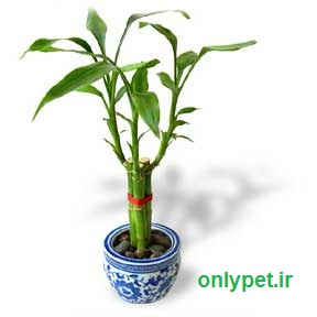 http://www.onlypet.ir/upload/user/upbox/1369701887.jpg