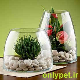 http://www.onlypet.ir/upload/user/upbox/1377142104.jpg