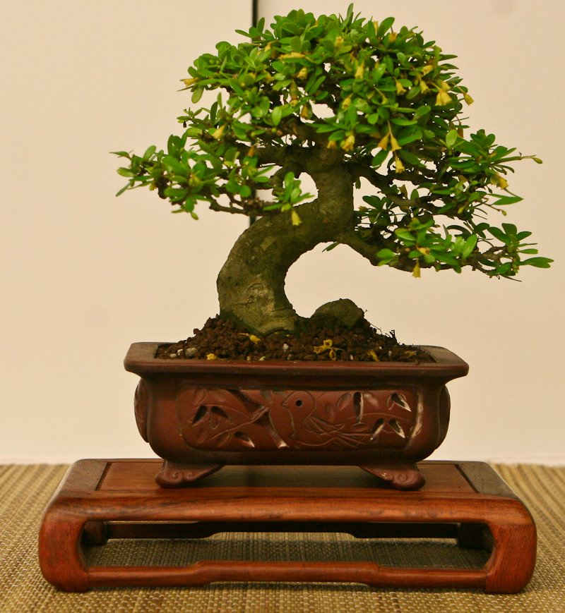 bonsai essay Below is an essay on up bonsai garden from anti essays, your source for research papers, essays, and term paper examples.