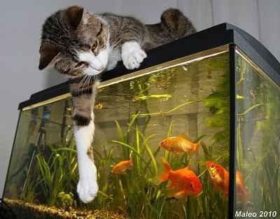 تصویر بسیار زیبا از تلاش گربه برای شکار ماهی