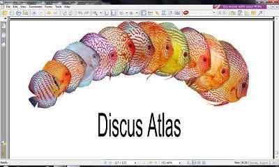 گونه های مختلف دیسکس در قالب فایل Pdf