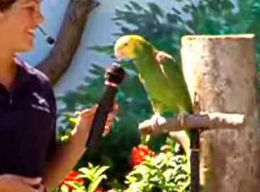 دانلود ویدیو کلیپ هنرنمایی طوطی آمازون
