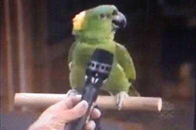 ویدیو هنرنمایی طوطی امازون و کاکادو