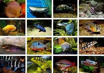 تصاویر بسیار زیبا از ماهیان آکواریومی برای دسکتاپ یا سایر…