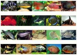 لیست ماهیان آب شیرین به همراه توضیحات و تصاویر