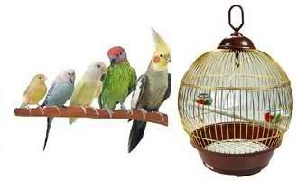 میله نشیمنگاه مناسب برای پرندگان (طوطی ، قناری)