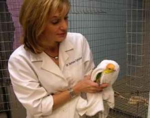 بیماری نیوکاسل (طوطی ، سایر پرندگان)