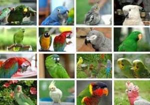 تصاویر بسیاز زیبا از طوطی سانان برای دسکتاپ یا سایر ….