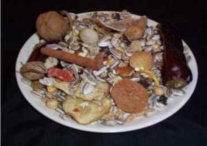 غذای خانگی برای طوطی