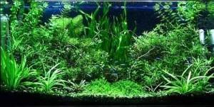 راه اندازی آکواریوم گیاهی (پلنت)