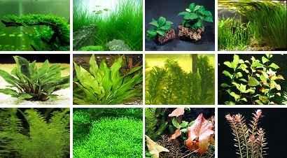نگهداری از گیاهان اکواریومی + انواع رایج