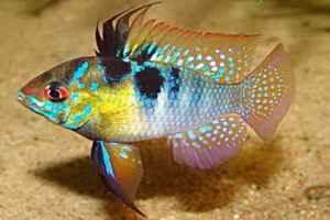 ماهی رامیزی