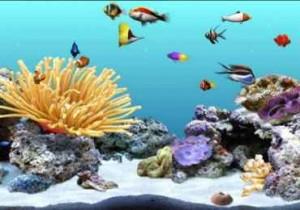اسکرین سیور اکواریوم DigiFish Clownfish
