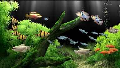 دانلود اسکرین سیور ماهیان اب شیرین (dream aquarium 1.7.00)