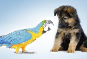 طوطی های وفادار، همانند سگ ها !