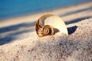 شور شدن سواحل و پیامدهای آن برای جانداران این اکوسیستمها