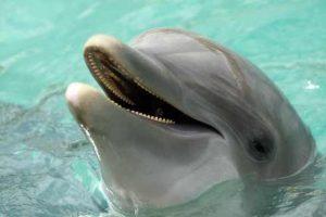 دلفین ها برای صحبت با یکدیگر از جملات کامل استفاده می کنند