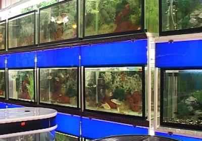 رشد ۹ درصدی صادارات ماهیان زینتی کشور در استان مرکزی