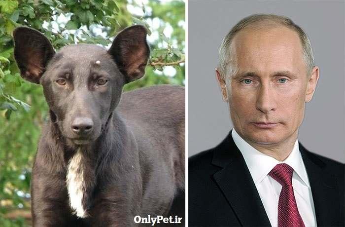 شباهت پوتین به سگ