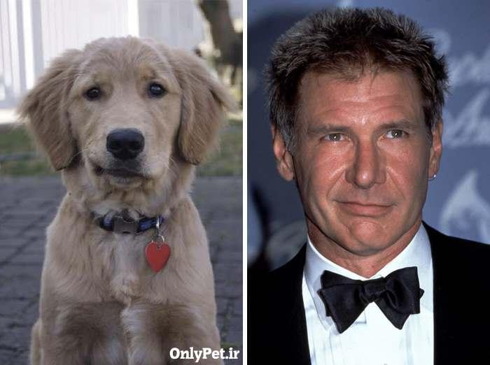 شباهت هریسون فورد به سگ