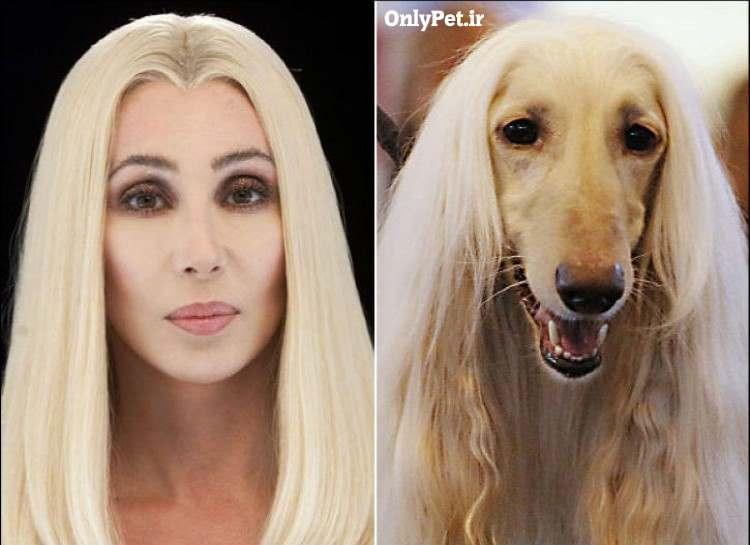 شر و شباهتش به سگ