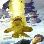 ماهی طلایی یا گلدفیش از جنس طلا