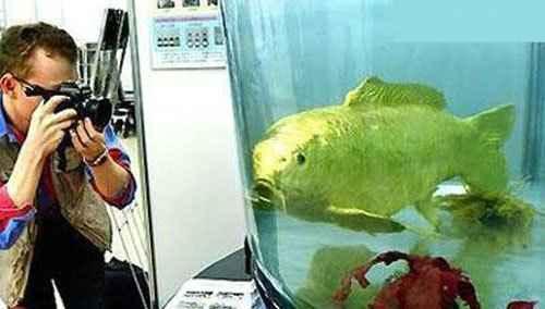 ماهی طلایی از جنس طلا! + تصاویر