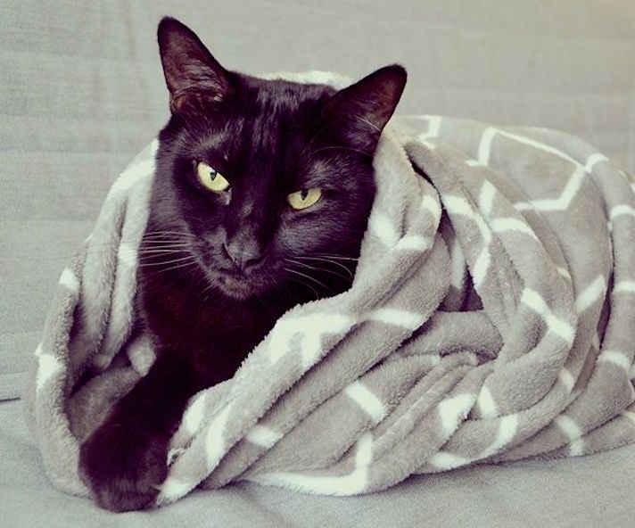 گربه ها از محیط های گرم لذت می برند