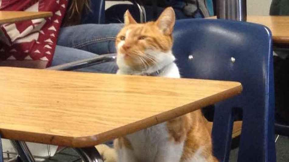 داستان یک گربه که دانش آموز شد!