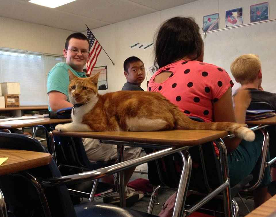 cat_highscool_03_onlypet-ir