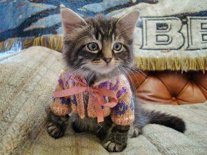 به مناسبت سرد شدن هوا و لباس های گرمی که برای حیوانات تهیه می شود