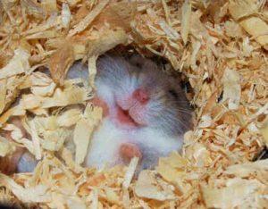 لبخند حیوانات + تصاویر