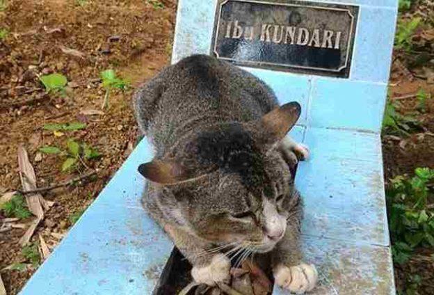 یک گربه وفادار یک سال است که کنار قبر صاحبش مانده است