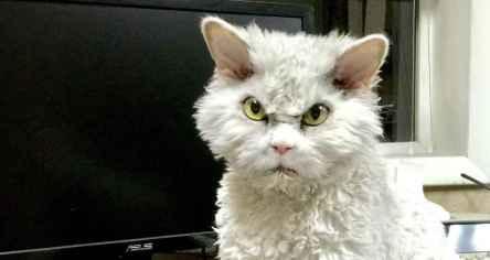 خشمگین ترین گربه جهان + تصاویر