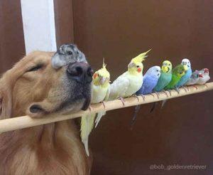 عکس: دوستی سگ با چند پرنده و همستر