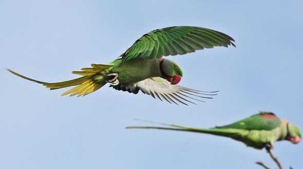 تاثیر تغیرات آب و هوایی بر روی پرندگان
