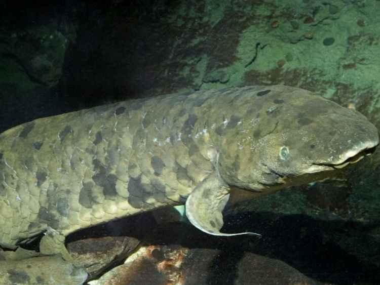 مرگ پیرترین ماهی جهان در آکواریوم شید