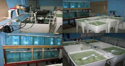 تولید سالانه ۲۰۰ میلیون قطعه ماهی زینتی در کشور