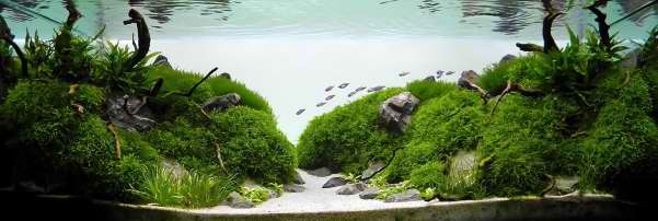 aquascaping OnlyPet.ir