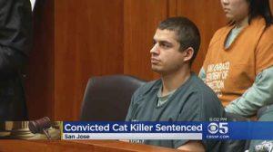 ۱۶ سال زندان برای قاتل ۲۱ گربه