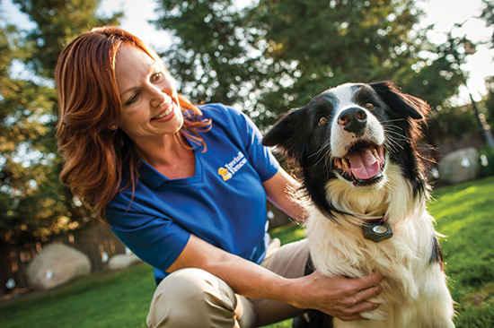نقش فن آوری تلفن همراه در بهبود زندگی حیوانات خانگی