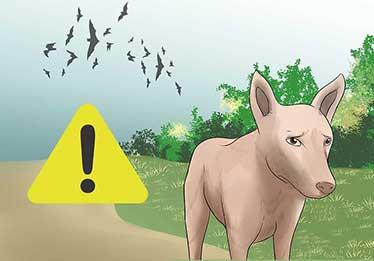 حیوانات چگونه زودتر از ما متوجه زلزله می شوند؟