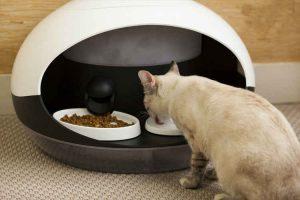 ابزاری خودکار برای غذا دادن به حیوانات خانگی کوچک