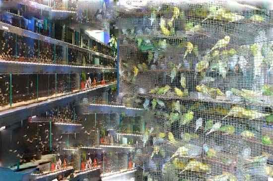 قیمت حیوانات خانگی از زبان رئیس و نایب رئیس اتحادیه فروشندگان پرندگان و ماهیها !