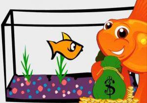 برای خرید، راه اندازی و نگهداری آکواریوم چقدر پول لازم است؟