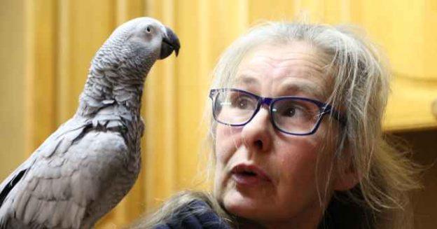 یک طوطی خاکستری با دستیار صوتی تنقلات سفارش می دهد!